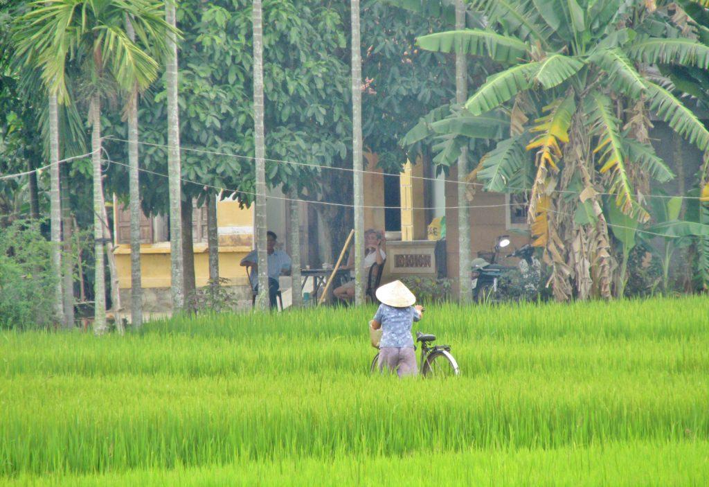Viet Nam, Quảng Ngãi, Tư Nghĩa cyclist