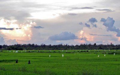 La fête du riz nouveau des Cơ Tu