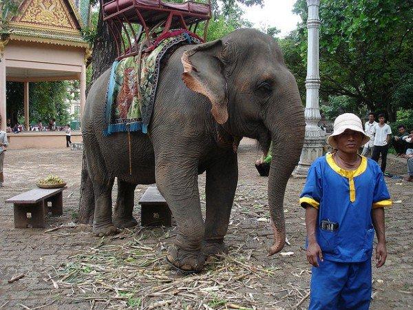 Ballade à dos d'éléphantpar Elliot Leuthold
