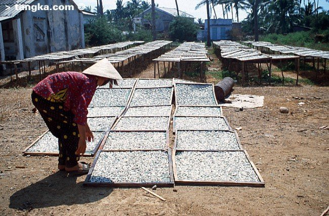 """Poissons séchés pour la fabrication du """"nuoc mam"""", Vietnam"""