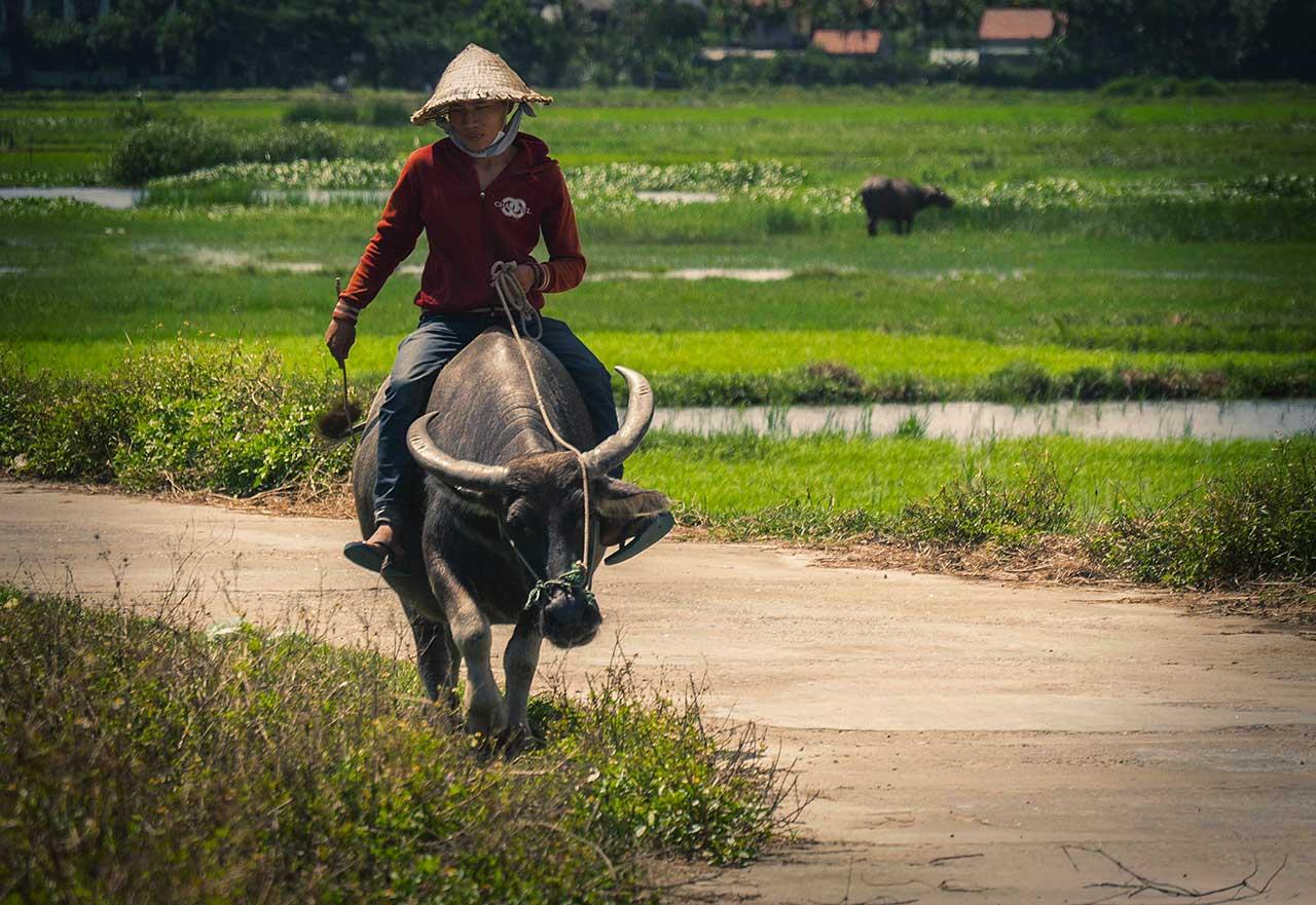 Agriculteur et rizières - Vinh Long, Vietnam